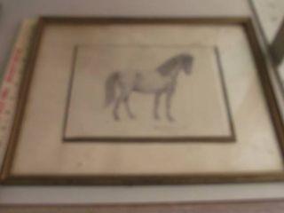 horse drawing framed