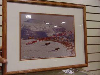 Framed photograph of Elk 22  x 17 5