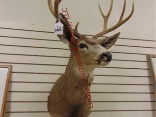 Buck head mount