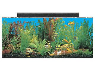 SeaClear 30 gal Show Acrylic Aquarium Combo Set  36 by 12 by 16  Clear