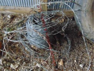 Partial spool of barb wire