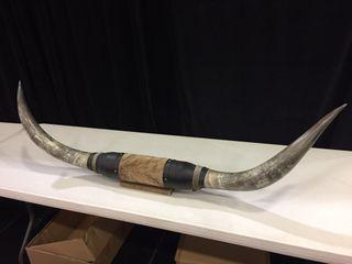 Bull horns 62x18