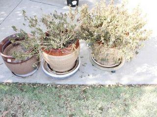 7 Outdoor Pots