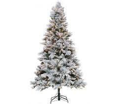 7 5a Snowdrift Spruce Quick Set Simple