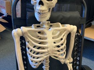 Pose N Stay Skeleton