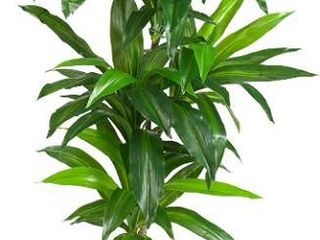 Nearly Natural 6596 6ft  Dracaena Silk Plant  Real Touch Green