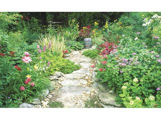Biggies 100  Garden Photograph Window Well Scenes
