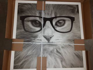 Framed Cat with Glasses Decor