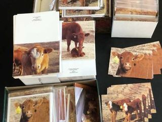 Hundreds of Cow Cards