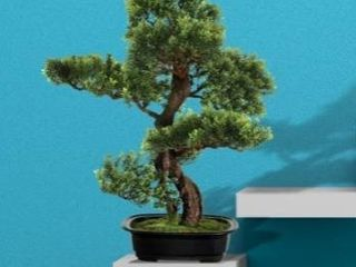 Pl baby boxwood table bonsai 20a  set of 3
