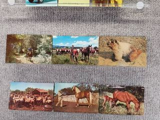 lot of 10 Vintage Postcards   Animal Cards
