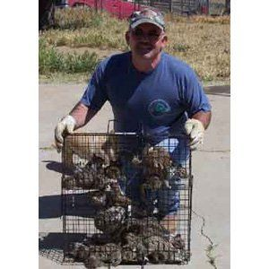 Rugged Ranch 072333 The Squirrelinator Trap Only