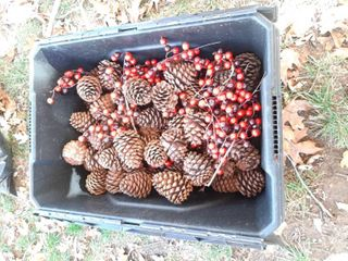 Husky Tub with Pine Cones