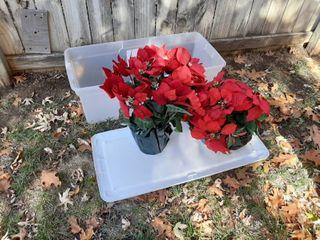 Tub with Poinsettias