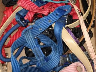 Small Dog Collars and leashes