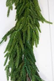 60  Natural Touch Norfolk Pine Garland