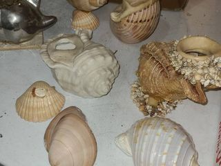 ASSORTED SEA SHEllS  Some used as planters