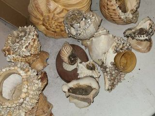Assorted SEA SHEllS used for planting plants