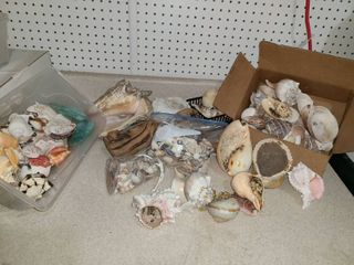 ABUNDANCE of Miscellaneous Sea Shells