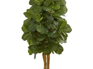 5490 Fiddle leaf Fig Tree