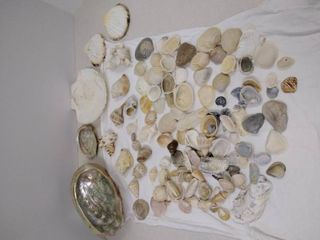 lot of Shells