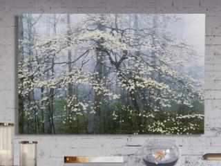 Jones Dogwood Canopy Premium Gallery