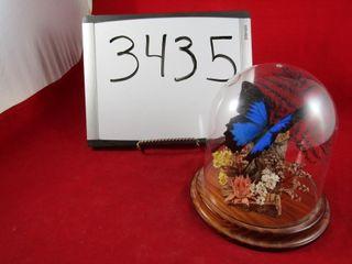 Dunk Island Butterfly Australian Papilio Ulysses s