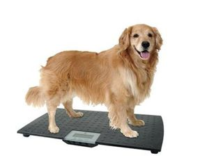 W C Redmon Precision Digital Pet Scales  large   powers on and works