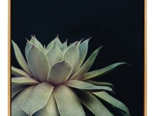Sylvie Succulent 18x24 Gold Framed Canvas Wall Art by F2 Images Retail 104 99