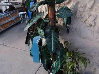 2 faux plants in pots