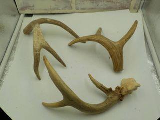 lot of 3 deer antlers