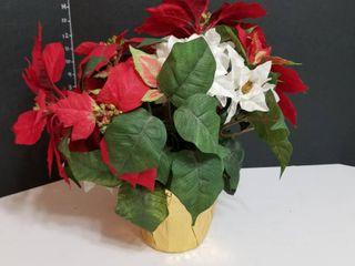 Poinsettias pot