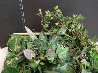 Assorted greenery stems