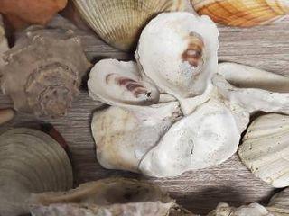 large lot of Sea Shells