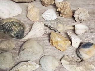 large lot of Seashells