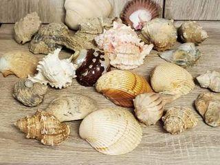 Big lot of BRAUTIFUl Seashellz