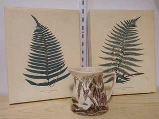 2  Botanical Frames   Japanese Pitcher