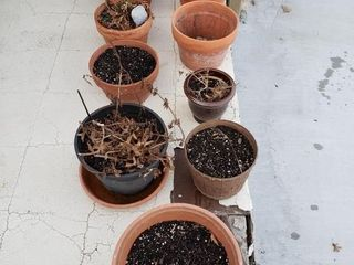7 Terracotta Planters   4 others