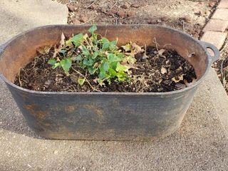 Oval Cast Iron Planter   25 x 12 5 x 9 5 in  tall