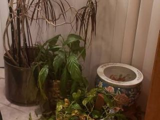 live Plants   2 in Ceramic Pots  1 in Basket and 1 in Brass pot   3 Plant Stands included