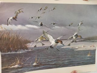 Ducks Flying Over Freezing lake Copy  By Owen Gromme  Rolled