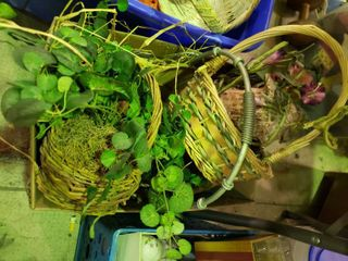 lot of Baskets and Artificial Decorative Plants