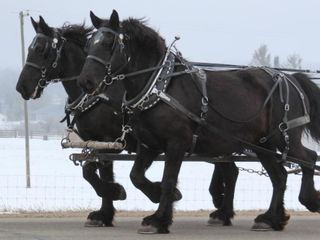 Yoder Bros Spring Horse & Carriage Auction