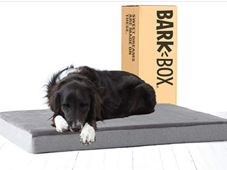 Barkbox Memory Foam Platform Dog Bed   Plush Mattress For Orthopedic Jointrelief