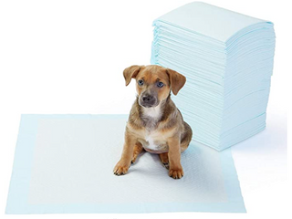 Amazon Basic Dog Toilet Training Pad Thick Oversized 50 sheet Set 71 X 86cm