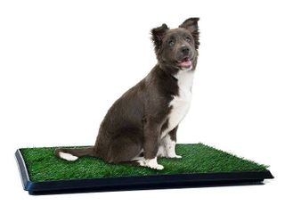 Petmaker Puppy Potty Trainer   The Indoor Restroom for Pets 20 x 25  Green