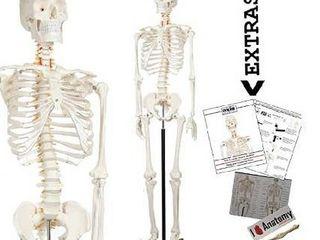 Axis Scientific Human Skeleton Model Anatomy Bundle  5  6  life Size Skeletal System  206 Bones  Interactive Medical Replica