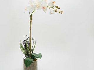 Real Touch Orchid Plant in a Wooden Moss Vase by Peony