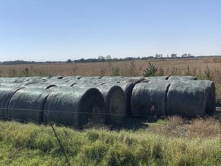 87   RD  BAlES  WHEAT HAY NET WRAPPED 73