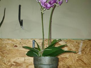POTTED PlANT with PURPlE FlOWERS
